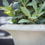 grön växt i vit keramikkruka