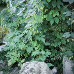 trädgård staty huvud
