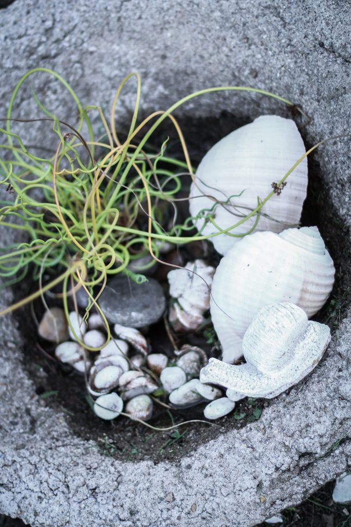 snäckor grön växt