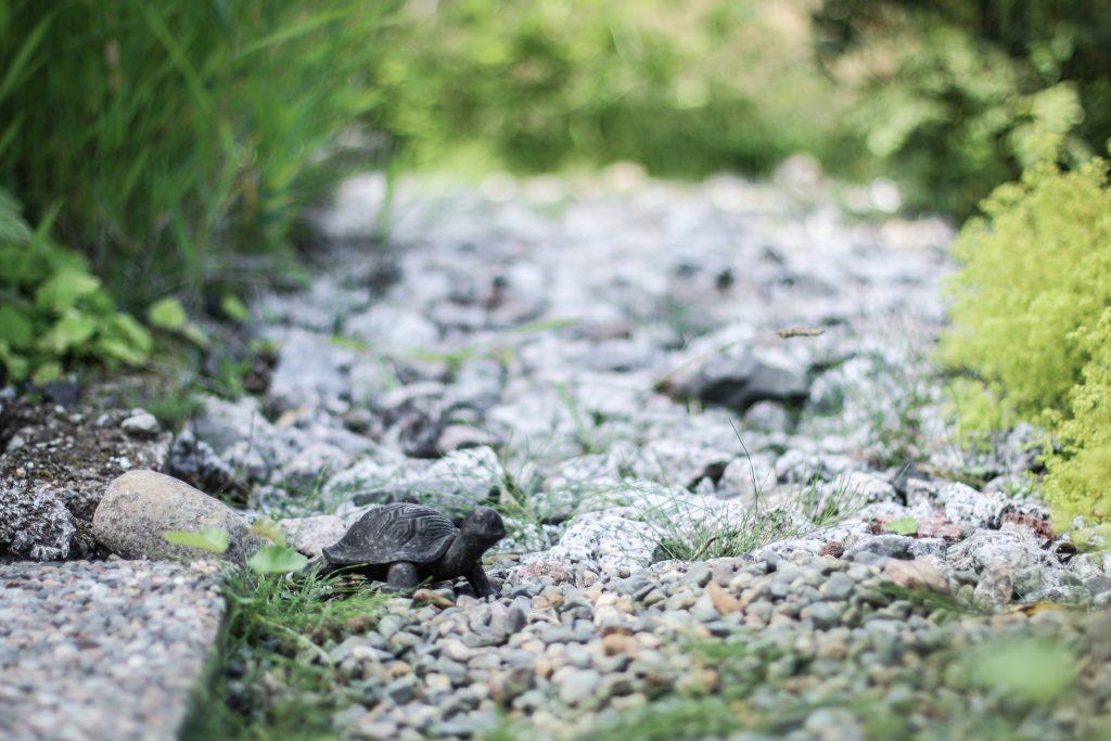 staty sköldpadda trädgård