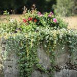 blommplantering hängande gröna växter blommor