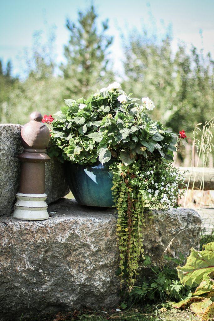 staty kruka hängande grön växt blommor